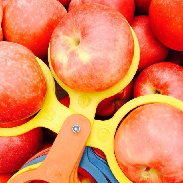 Фото - Оптовая продажа овощей и фруктов